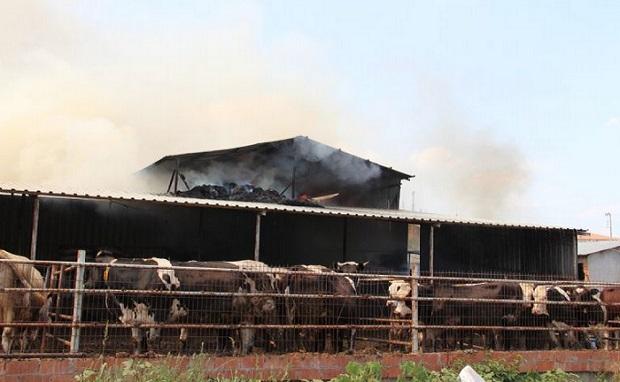 Çıkan Yangında 5 Bin Balya Saman Kül Oldu