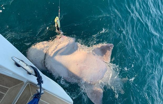 Çanakkale'de Oltayla 4 Metrelik Köpek Balığı Yakaladılar